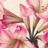 [Exposition] « Précieux vélins » au Muséum d'Histoire Naturelle : un Éden en fleur au milieu de l'hiver