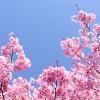 Yoko Ogawa veut se souvenir des belles choses